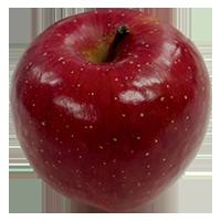 利根沼田のりんご